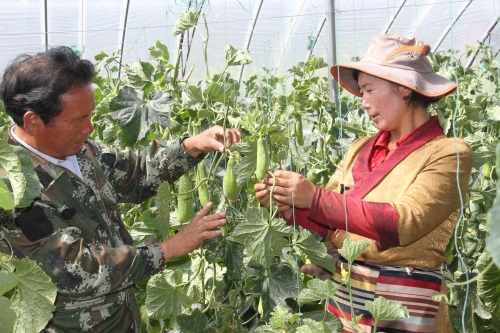 3理塘县贫困群众在农业产业园区学技术.jpg