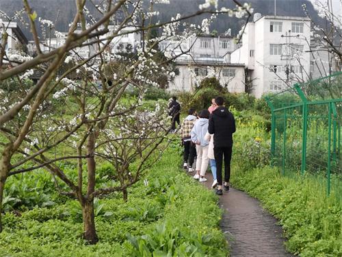 游客在李子花花海中穿行.jpg