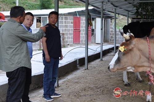 01(网,图片都望刊发下哈!谢谢!)雅江税务稿件配图    配图8:查看帮扶村奶牛养殖产业.jpg