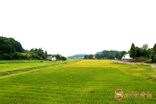 29(网)西充建成特色产业基地33万亩配图    义青观十万亩现代(有机)农业粮油基地2.jpg