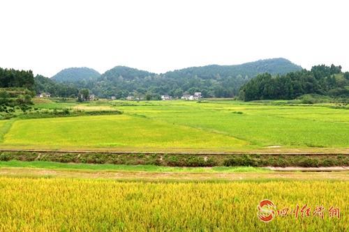 29(网)西充建成特色产业基地33万亩配图    义青观十万亩现代(有机)农业粮油基地3.jpg