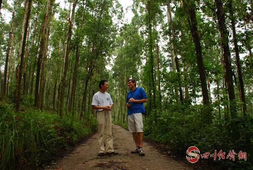 澳大利亚塔斯马尼亚Wayne Tibbets教授在乐山巨桉人工林中现场指导.png