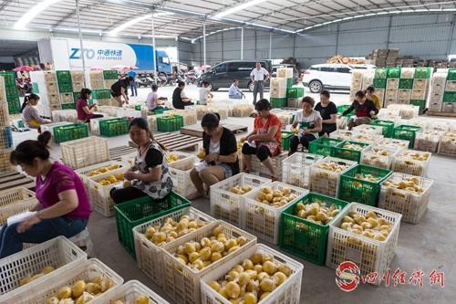 09(网)世界柠檬产业绿色发展宣言今日在配图    安岳柠檬.jpg