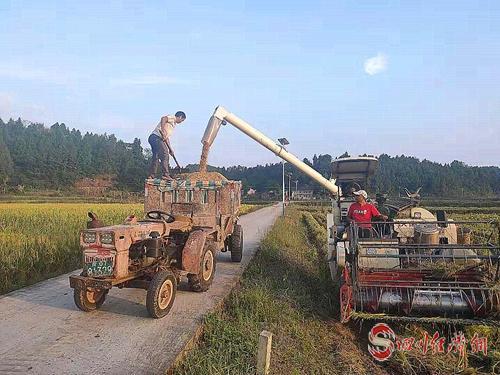 06(网)西充:20余万亩水稻丰收配图    图片说明:水稻机械收割现场3.jpg