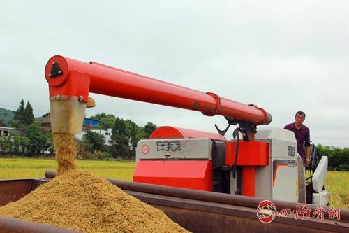 06(网)西充:20余万亩水稻丰收配图    图片说明:水稻机械收割现场4.jpg