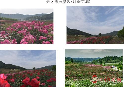 11(11胡 网 0927 钟正有)此生不来溪月谷 看遍花田也枉然配图    旅游资料图片6.jpg