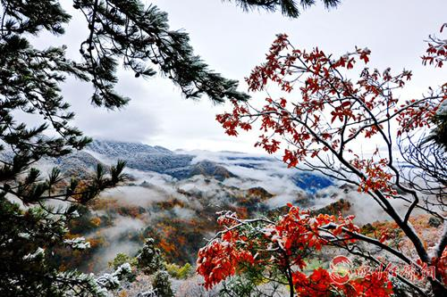 07(网)旺苍大峡谷列入2019年全国森林康养基地配图    旺苍大峡谷雾景.png