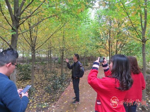 27(网)东坡区即将举办第二届红枫观赏节配图   游客赏枫.jpg
