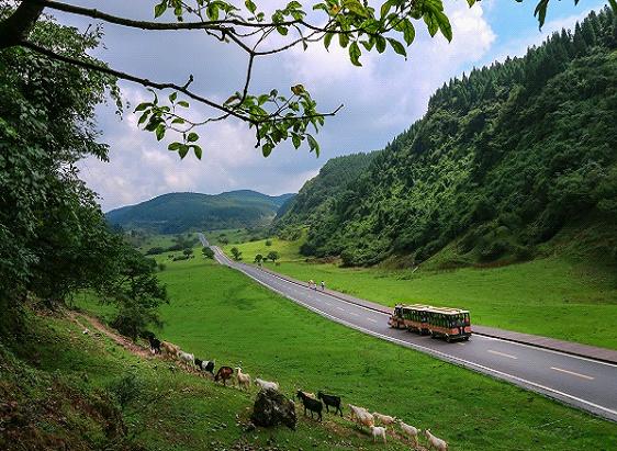 21(21劉 網 1128 際恒)《一路成年》竟三期取景重慶武隆,這個寶藏旅行目的地太火了!配圖   羊群與仙女山最美公路構成一幅美麗畫卷.jpg