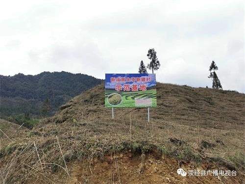 滎經新廟鄉:做大黃金茶產業 讓村民共享發展紅利配圖   經過幾年的堅持發展,當地的黃金茶產業已漸成規模.jpg