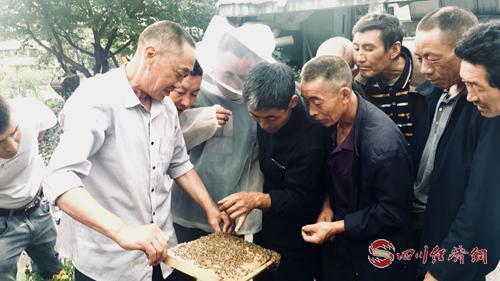 40(网)茂县举办中蜂生态养殖项目技术培配图    图片说明:现场指导培训0904_1.png