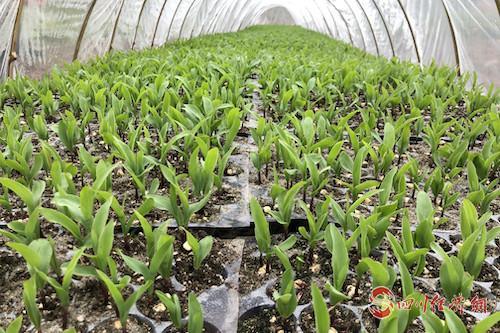 圖3:搶抓農作物生產.jpg