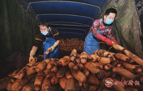 27(网)资阳高新区:一切为了稳定保供配图   保障蔬菜供应.jpg