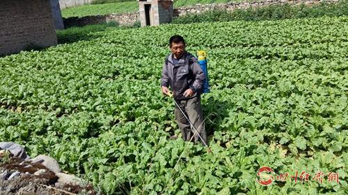 赵海兵在田间管理种植的蔬菜.jpg