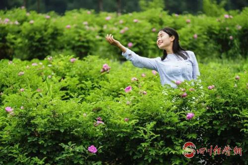 雙龍橋玫瑰園花開正艷.jpg