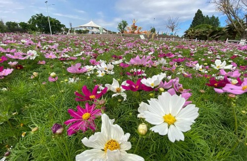 27(27劉  網 0603 際恒)稿三:看花一定要去花卉觀光景區?這個沙灘花海一定別錯過!配圖   圖三:中國和海.jpeg