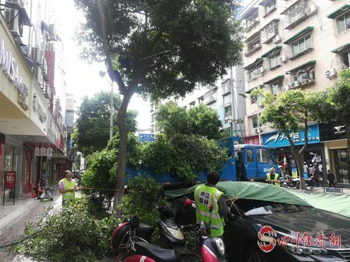 图为开展城区绿化修剪工作现场照片.png