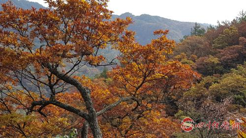 09(网,app)五马归槽国有林场改革下的美丽蝶变配图   植被丰富的天然林场.jpg